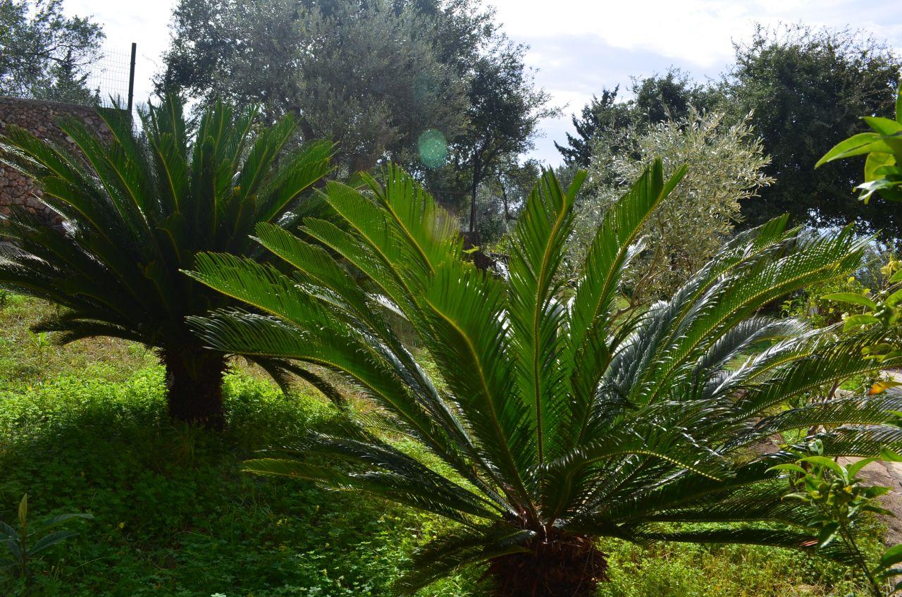 ENJOY WONDERFUL APARTMENTS IN DHERMI. PROPERTY IN ALBANIA COASTLINE